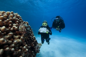 How to Choose your First PADI Specialty